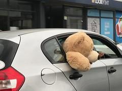I saw a 🐻 (Val in Sydney) Tags: fun bear australie australia teddy ours