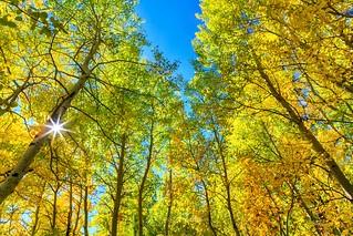 Walk into the autumn 樹樹皆秋色