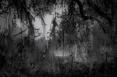 Mystic Sunrise (JDS Fine Art Photography) Tags: bw monochrome mystic mystical moody haunting light illumination inspirational
