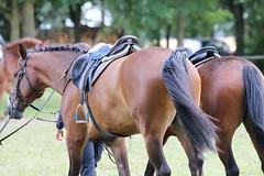 _MG_5888 (dreiwn) Tags: ridingarena reitturnier reiten reitplatz reitverein reitsport ridingclub equestrian showjumping springreiten horse horseback horseriding horseshow pferdesport pferd pony pferde tamronsp70200f28divcusd