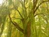 """Alte Weide mit Herbst-""""Schleier"""" (Jörg Paul Kaspari) Tags: trier autumn herbst fall mattheiserweiher park salixalba´tristis´ hängeweide trauerweide krone baumkrone salixpendula alteweide old willow salix"""