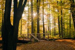 Eremitage Bayreuth (Miasura) Tags: eremitage bayreuth park fall herbst leaf laub gelb yellow orange franconia franken trees bäume
