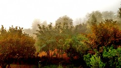 "mattino nebbioso (""in explore"" il 21/10/2017)!!!!) (Echeveria62) Tags: 7dwf saturday landscape sundaylights weeklytheme photography techniques"