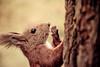 Eichhörnchen (Lispeltuut) Tags: herbst schlossgarten schlosscharlottenburg schlosspark berlin tiere nature eichhörnchen squirrel tier animals autumn ngc coth coth5 sunrays5 platinumheartaward