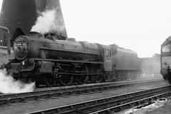 44776 (Gricerman) Tags: saltley saltleyshed black5 black5class 460 44776 steam steambr steammidland midland midlandsteam midlandsteambr br britishrailways brsteam brmidland lms
