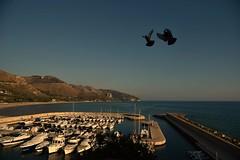 Angeli (bartric - Bartolomeo) Tags: nikond750 landscape panorama bartolomeo sperlonga angeli mare molo barche