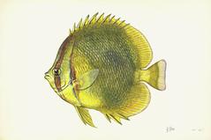 Anglų lietuvių žodynas. Žodis overfish reiškia pergiams lietuviškai.