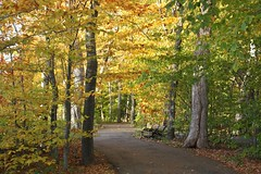Bench and Fall Foliage (Craigford) Tags: charlottetown pei canada hillsborough fall autumn colors leaves foliage trail bench