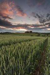 Lothians-61.jpg (Chris_Hoskins) Tags: cammoestate wwwexpressionsofscotlandcom scottishlandscapephotography scotland edinburgh scottishlandscape cammo sunset landscape centralscotland