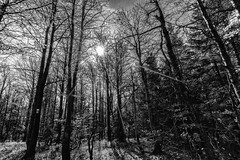 Autumn Forest (*Capture the Moment*) Tags: 2017 bavarianforest bayerischerwald bäume forest fotowalk landschaften natur nature sonne sonya7m2 sonya7mii sonya7mark2 sonya7ii sonyfe1635mmf4zaoss sonyilce7m2 sun trees wald wetter monochrome schwarzweiss