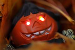 Oranje (Pascal Volk) Tags: berlin althohenschönhausen konradwolfstrase weisenseerweg berlinlichtenberg naranja orange halloween macromondays orangedecorations ff244 flickrfriday pumpkin kürbis calabaza macro makro 105mm closeup nahaufnahme macrodreams bokeh dof depthoffield herbst fall autumn otoño canoneos6d sigma105mmf28exdgoshsmmacro 7dwf smileonsaturday vividorange