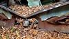 20171021_151648 v2 (collations) Tags: ontario mcleansautowreckers autowreckers wreckers automobiles autos abandoned rockwood derelict junkyards autograveyards carcemeteries