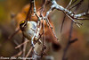 Hanging Around (vernonbone) Tags: 1855kitlens 2017 500mm autumnoctober black d3200 eastpoint eastpointpark goldencrownedkinglet gray lens ontario white birds colors nikon outside sigma woodpecker yellow