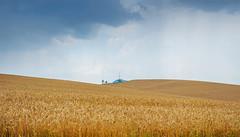 Mihalchy Cecino (Anatoliy00) Tags: chernivtsi ua wheat summer 2016 grass mihalchy europe ukraine nikon d5000 1855kit nature