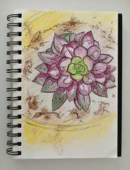 03_suculenta ([silvicius]) Tags: taller soniaesplugas illustration ilustración boceto sketch colores colors silvicius silviaparravicini silvis