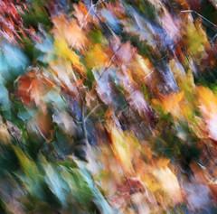 The canvas of the wind (Robyn Hooz) Tags: november wind canvas vento alberi autunno fall impressions padova colori quadro move movimento