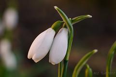 Macro flower @ Alblasserdam