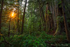 Cheewhat Sunstar - Vancouver Island, Canada (Thomas J Dawson) Tags: cheewhatgiant vancouverislandforest ancientforest gianttrees oldgrowthforest thomasdawsonphotography vancouverisland