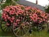 گاریهای زیبای گل (rezapadash81) Tags: گاری گل