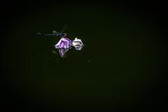 穂花の壁紙プレビュー