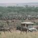 Mara Safari-8112.jpg