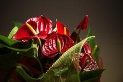Lighting blooms (Shooting in RAW) Tags: fiori natura piante colore petali regali verde composizione stilllife raw nef d600 nikon nikkor afs80200 f28 tele zoom