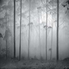 Rain Forest by Hengki Koentjoro -