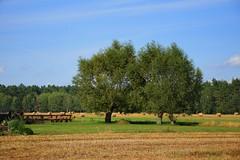 summer moods (JoannaRB2009) Tags: summer mood dolnyśląsk polska poland landscape view nature green tree trees field blue dolinabaryczy