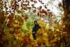 Heine (Trivial Dependence) Tags: heinechristiansen carlzeiss otus otus1455 55mm f14 zeiss zf2 distagon nikon d810 denmark dyrehaven jægersborghegn autumn efterår forest portrait pierrestachurska