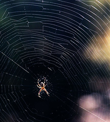 Happy Halloween (studioferullo) Tags: art beauty bright colorful colourful colors colours contrast dark design detail edge light natural outdoor outside perspective pattern pretty study sunlight sunshine texture tone world tucson arizona spider web halloween macro