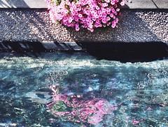 1 Hang Over (Robert Cowlishaw (Mertonian)) Tags: pond pink reflection cement concrete blue canon powershot g7x mark ii canonpowershotg7xmarkii mertonian urban mirror deepcallstodeep light robertcowlishaw