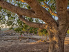 Tree of Words (Giovamilo_90) Tags: verde tree trees nature color colors agrigento greek ancient sicily sicilia sun sunset