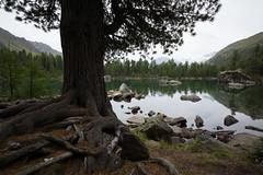 Lagh da Saoseo (46° 23′ 53.38″ N, 10° 7′ 34.64″ E) (Toni_V) Tags: m2405327 rangefinder digitalrangefinder messsucher leica leicam mp typ240 type240 21mm superelmarm hiking wanderung randonnée alps alpen puschlav valposchiavo graubünden grisons grischun valdacamp saoseo laghdasaoseo switzerland schweiz suisse svizzera svizra europe bergsee mountainlake reflections landscape tree summer ©toniv 2017 170828