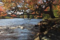 2I3A1536 (sarkeshikian) Tags: river tree water fall port sydney muskoka huntsville ontario canada