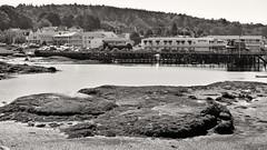 2017-09-13 Boothbay Harbor, Maine (tsegat1) Tags: boothbayharbor bw hss cmwdbw maine lowtide