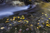 Caramanico - Foglie in Autunno (Andrea di Florio (9.000.000 views!!!)) Tags: italia italy abruzzo andreadiflorio appennino borgo campanile caramanico chiesa duomo eramo inverno maiella montagna paesaggio pescara orfento fiume river autunno foglie bosco boschi scorcio