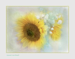 Summer's Last Breath; Autumn's First (Christina's World aka Chrissie Bee) Tags: nature artistic art autumn sandiego stilllife summer bright brightcolors brilliant creative california colors digitalart dramatic digitalpainting exotic expressionism flower flowers garden impressionism impressionistic light outdoors painterly plant painting romantic scenic textures texture unitedstates usa white exoticimage yellow border frame