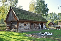 in the countryside (JoannaRB2009) Tags: ducks birds barn building architecture wood wooden light sunlight sunlit nature landscape view autumn fall openairmuseum skansen polska poland village countryside farm animals