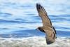 the sailing birds are all romantics (1crzqbn) Tags: hss sliderssunday blue blur