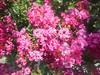 338 (en-ri) Tags: fiorellini little flowers rosa verde foglie leaves arbusti sony sonysti