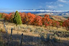 Utah's Snowbasin Valley (photo61guy) Tags: utah nikond7000 autumn autumncolors fallcolors fallfoliage nature landscape clouds blue blueskies platinumheartaward greatphotographers