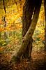 Tree Tango (AlistairJBorland) Tags: ethereal trees