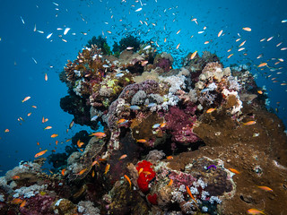 Sea Life at The Pinnacle