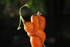 Safer Together (zoe.moskwiak-belgium) Tags: carrots orange contrast color hug carottes light