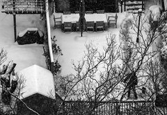 Back Yards in Winter (stephanieswift2) Tags: backyards snow winter trees snowshovelling monochrome