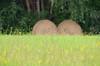 774 juillet 2017 - au bord du Cher entre Saint-Georges-sur-Cher et Chenonceau (paspog) Tags: france cher juillet july juli 2017 praire meadow field paille foin balledepaille straw