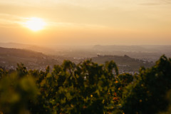 DSC_524 (Mjooolka) Tags: piedmont sicily sicilia italy italia landscape city cityscape people wine art culture colorfull church italie piemonte palermo guarene alba bra cuneo wineshop food enogastronomy sun colours rise fall street vitisvinifera langhe barolo autumn summer market sky castle sunset nature plant nikond3200 nikon yongnuo 35mm sampeyre becetto anna friends girl slowfood slowwine cheese beautiful