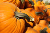 A Pile of Pumpkins (alanmeyer.california) Tags: usa america california centralvalley sacramentovalley farm pumpkins gourds pumpkinfarm harvest autumn