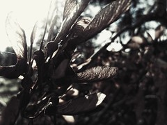 Wings (J.C. Moyer) Tags: tree branches nature noir rustic wind melancholly sad colour color leaves forest emotion quiet motorolamotog4plus spidersilk gothic