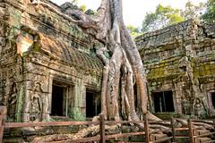 Ta Phrom Angkor Wat Cambodia (Jutta M. Jenning) Tags: tempel angkorwat glaube religion asien kambodscha cambodia tempelanlage siemreap gebaeude turm treppen angkor angkorthom dchungel verwunschen ruine ruinen saeule saeulen baum baeume wurzel wurzeln wuergefeigen wuergefeige feigenwurzeln